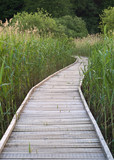 Wooden pathway over a swamp area. poster
