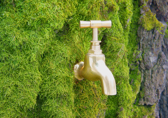 Old gold faucet on mossy birch bark