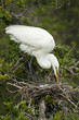 White Heron with Eggs