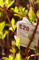 Banknotes on tree