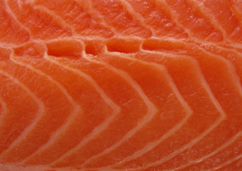 Macro fillet of raw salmon