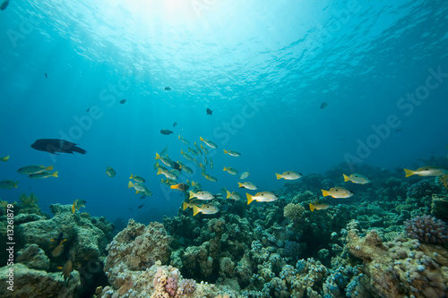 Poster Water planten coral and fish around Sha'ab Mahmud