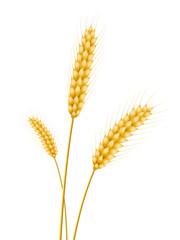Trois épis de blé