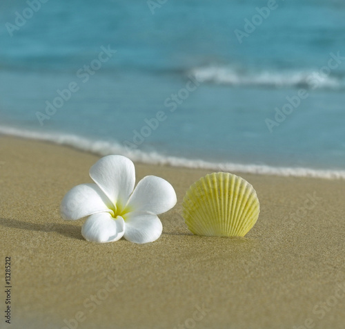flower and shell on the beach