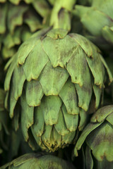 single artichoke