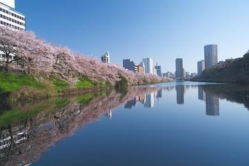 皇居外堀と桜並木
