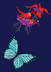 Fuchsia and Butterfly