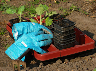 Gartenhandschuhe und Blumentopf