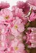 gemme e pietra rosa con riflesso