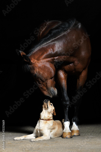Foto op Canvas Paarden Horse and dog