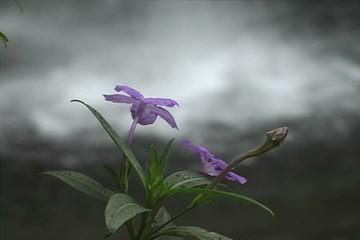 Cascada y flor