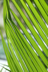 jeune palme verte