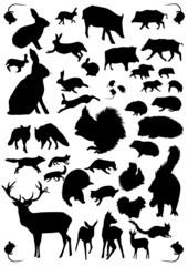 Tiere des Waldes