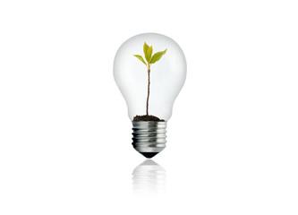 Kleine Pflanze in Glühbirne