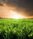 field of cereals in backlight to sunset poster