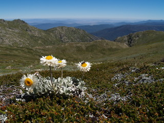 Alpine sunray in Kosciuszko National Park