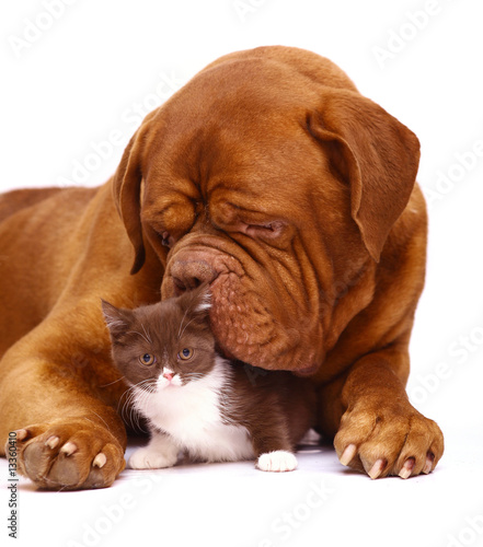 Big dog and small kitten.
