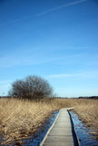 Wooden pathway poster