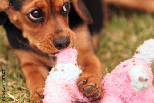 Cute puppy with its favorite play toy