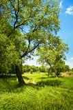 Fototapety summer landscape