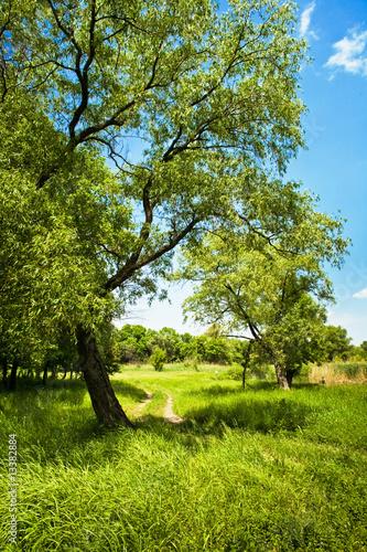 letni-krajobraz