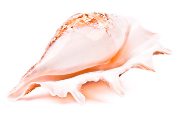 Shell isolated