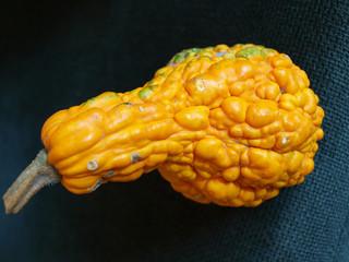 dynia,pumpkin