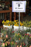Tulip flowers for sale with sign