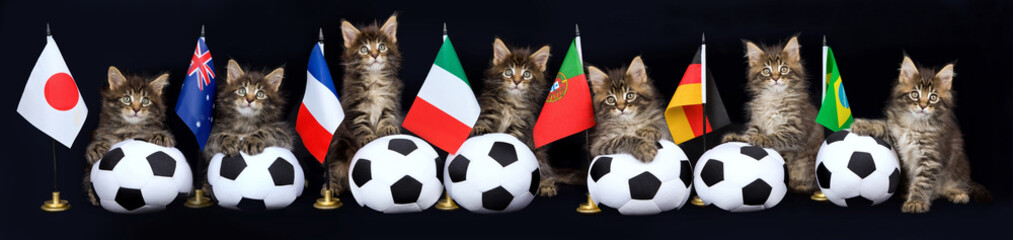 Pano of 7 Maine Coon kittens with soccer balls and flags