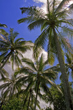 Vertical version of beautiful warm coconut tree