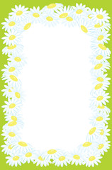 Floral frame background from camomile flowers