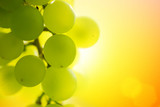Fototapety Grapes at sunset