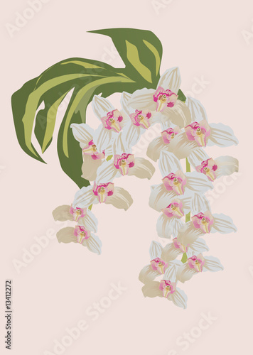 white and pink orchid branch