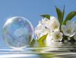 Seifenblase Aprilfrische