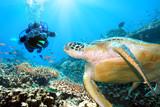 Green turtle underwater poster