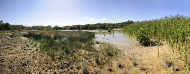 Dried pond panorma