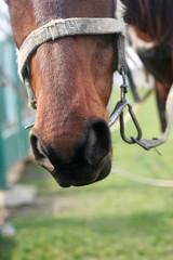 muzzle of horse