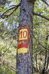 Numero dieci su un albero