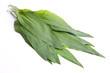 Blätter von frischem Brärlauch mit Richtung zum Betrachter
