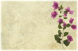 Pink bougainvillea branch on pale ribbed parchment poster