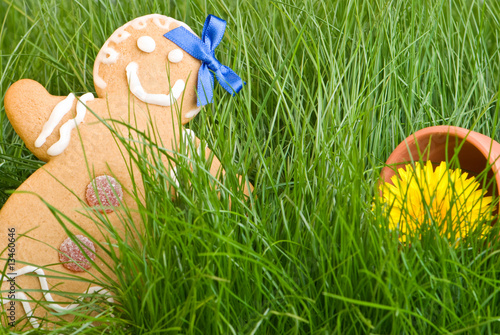 Gingerbread In Grass
