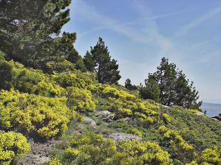 Parque Natural de Peñalara, Madrid