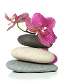 Fototapety Orchid laying on stones