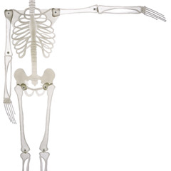 Halloween skeleton layout isolated on white
