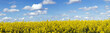 Rapeseed field panoramic landscape