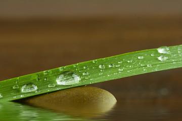 filo d'erba con gocce