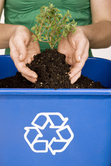 Hands holding small tree over recycling bin filled with soil