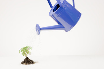 Watering can and small plant