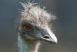 Fototapeten,vögel,close-up,pecker,portrait