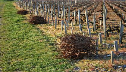 sarments en bout de vigne au château margaux